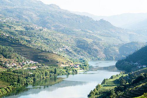 Douro-Rivier tussen Wijngaarden: Portugal