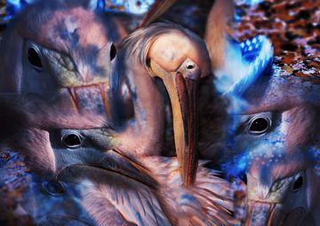 Pelikanen von Ans van der Heide