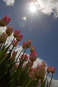 Tulpen in tegenlicht van Ronald Jansen
