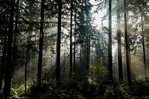 Forest nr.1 van