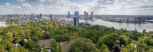 De Erasmusbrug Rotterdam