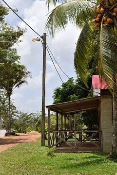 Surinaamse natuur van Chantal de Rooij