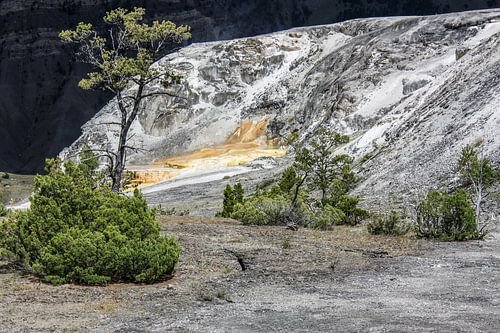 mound terrace - yellowstone national park van