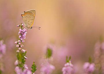 Schmetterling in der Heide von Elles Rijsdijk