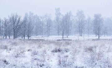 Weiße Landschaft von Vince Pellegrom