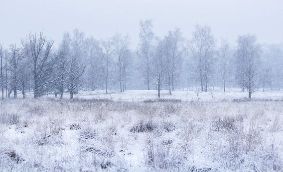 Wit landschap