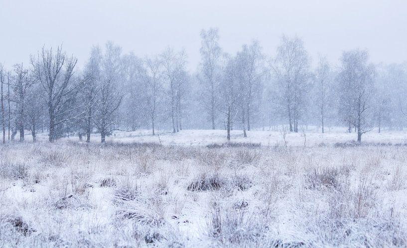 Wit landschap van Vince Pellegrom