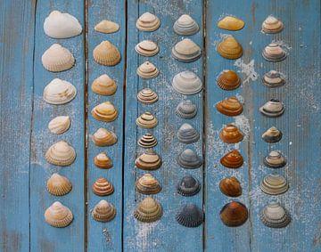 Muscheln von Odette Kleeblatt