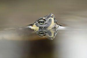 Schildpad spiegeling  von Frouwkje Fotografie
