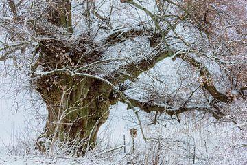 Winter an der alten Schäferlinde