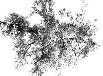 Tree Magic 103 von MoArt (Maurice Heuts)
