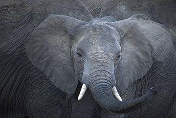 Elefant von anja voorn