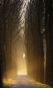 Bos laan tijdens zonsopgang von Wijnand Kroes