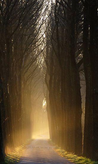 Bos laan tijdens zonsopgang
