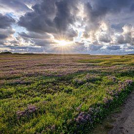 De Slufter, Texel. van Justin Sinner Pictures ( Fotograaf op Texel)