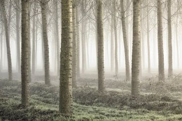 Kleine bos, Fiorenzo Carozzi van 1x