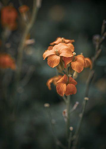 Oranje wilde bloem