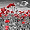 Idyllische Poppy Veld van Melanie Viola thumbnail