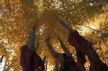 Herfst vanaf de grond van Tobias Van der ploeg
