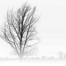 De boom van Maren Oude Essink