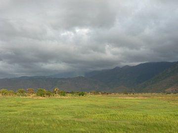 'Graslandschap', Tanzania von Martine Joanne