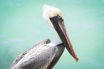 Posing Pelikan von Michel Geluk