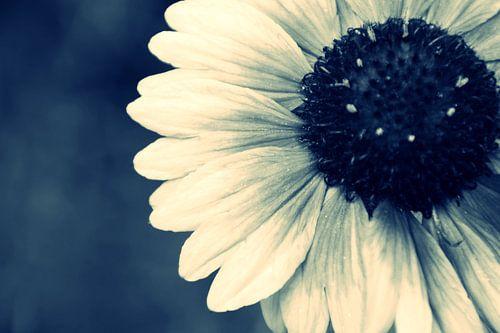 GARDEN FLOWER - CROSS/PROCESS
