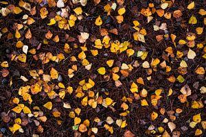 Nature's Flatlay - Birkenblätter