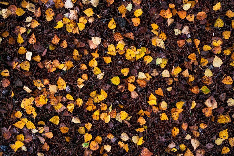 Nature's Flatlay - Berken blaadjes van Rick Kloekke
