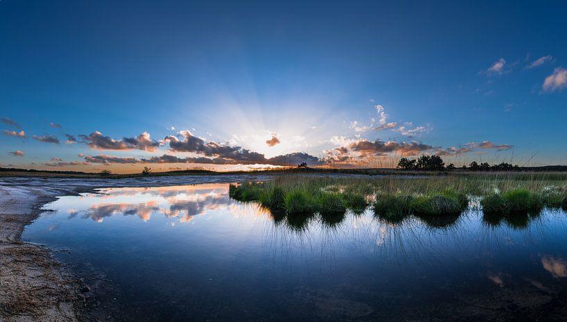 Swampland van Igwe Aneke