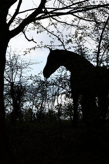 Paarden Silhouet