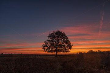 Baum in Stille auf der Heide in Ermelo von Robin van Maanen