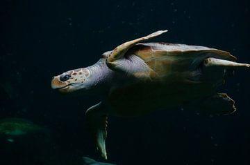 Zeeschildpad van Katrien Ertryckx