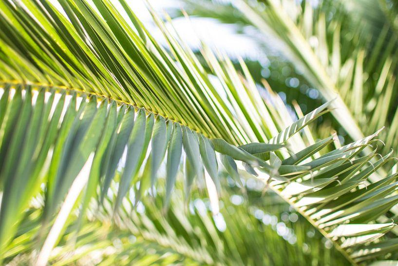 Details van een palmblad in kleur. sur Manon van Goethem