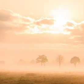 Zonsopkomst op een mistige morgen in het Staphorsterveld van Martin Bredewold