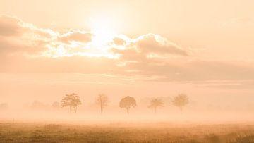 Sonnenaufgang an einem nebligen Morgen von Martin Bredewold