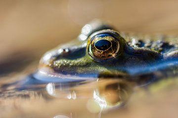 Durch das Auge des Frosches von Danny Slijfer Natuurfotografie