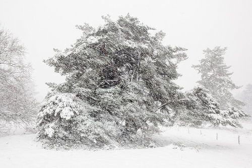 Sneeuw landschap Veluwe van