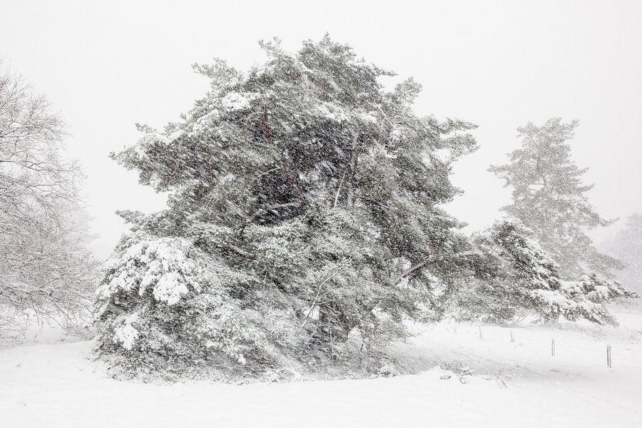Sneeuw landschap Veluwe van Elroy Spelbos