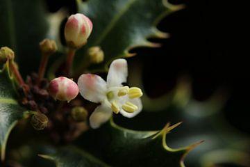 Blühende Distel von Pim van der Horst