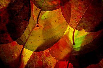 Herfstbladeren 20 van Henk Leijen
