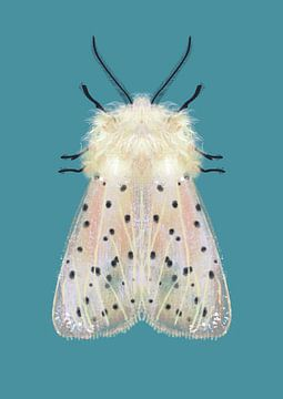 Weiße Motte farbiger Hintergrund von Angela Peters