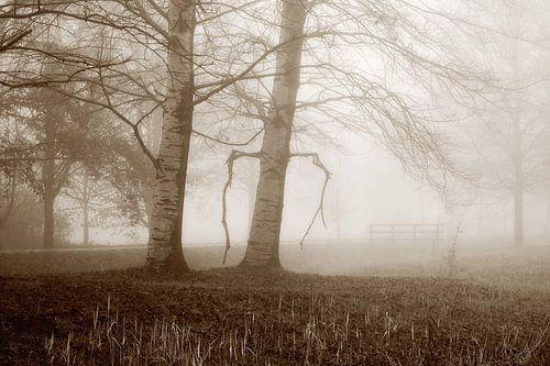 Nebel am Herbsttag