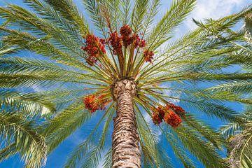 Onder de palmboom van Denis Feiner