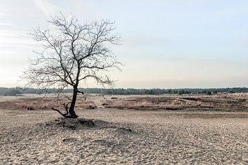 Kale boom op een zandvlakte van Ruud Morijn