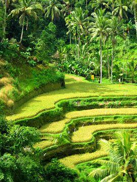De wereldberoemde rijstterrassen op Bali van Thomas Zacharias