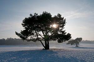 Winterochtend Soester Duinen van