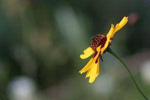 Eenzame gele bloem