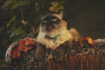 Autumn cat van