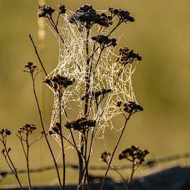 Spinnenweb in het ochtendzonnetje van Joke Beers-Blom